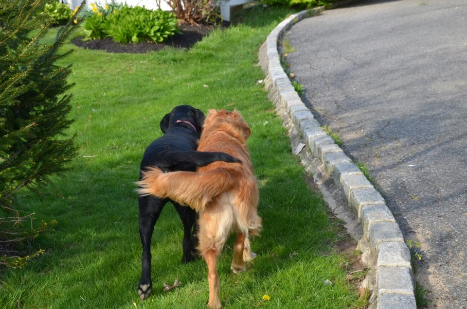Cute dogs - part 6 (50 pics), two dogs walking together with their tail holding each other
