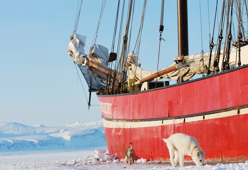 dogs outside of noorderlicht ship frozen in the ice in northern norway