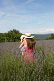 lavender fields of Istria