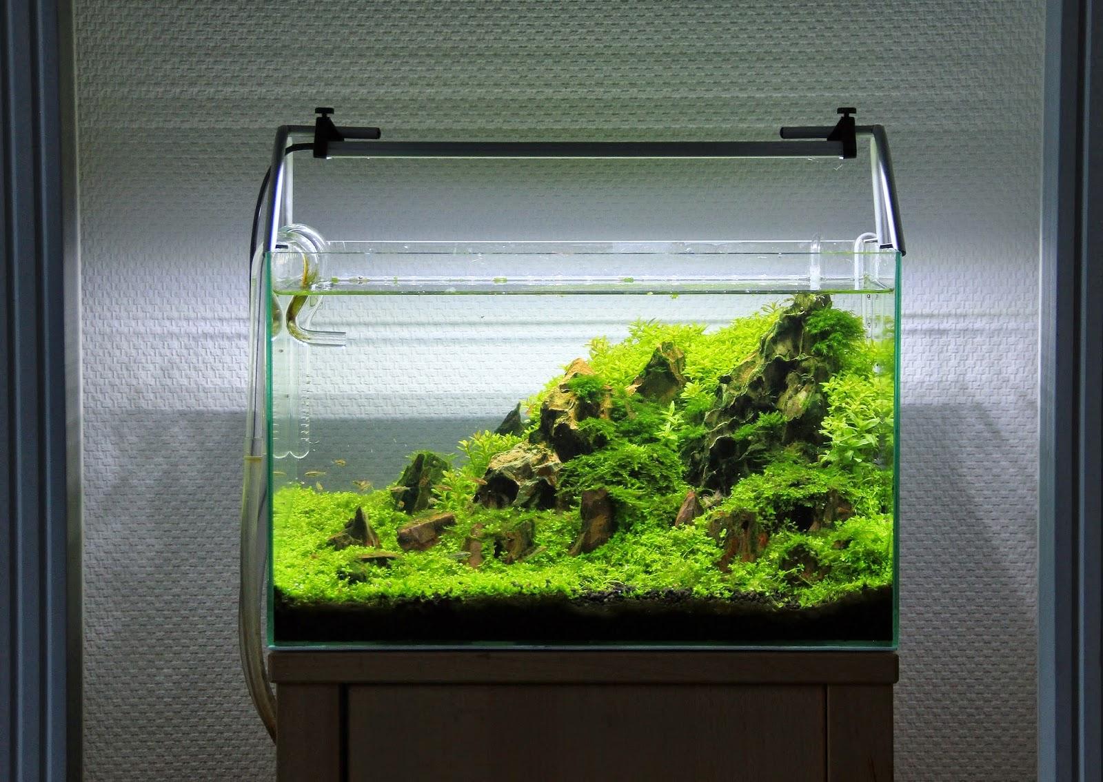 Aram Schneider Aqua Scaping  Update vom 40x25x25cm Nano Aquarium