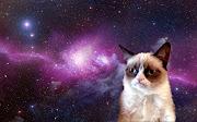 Tarder Sauce A.K.A The Grumpy Cat