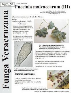 Puccinia  malvacearum (III)