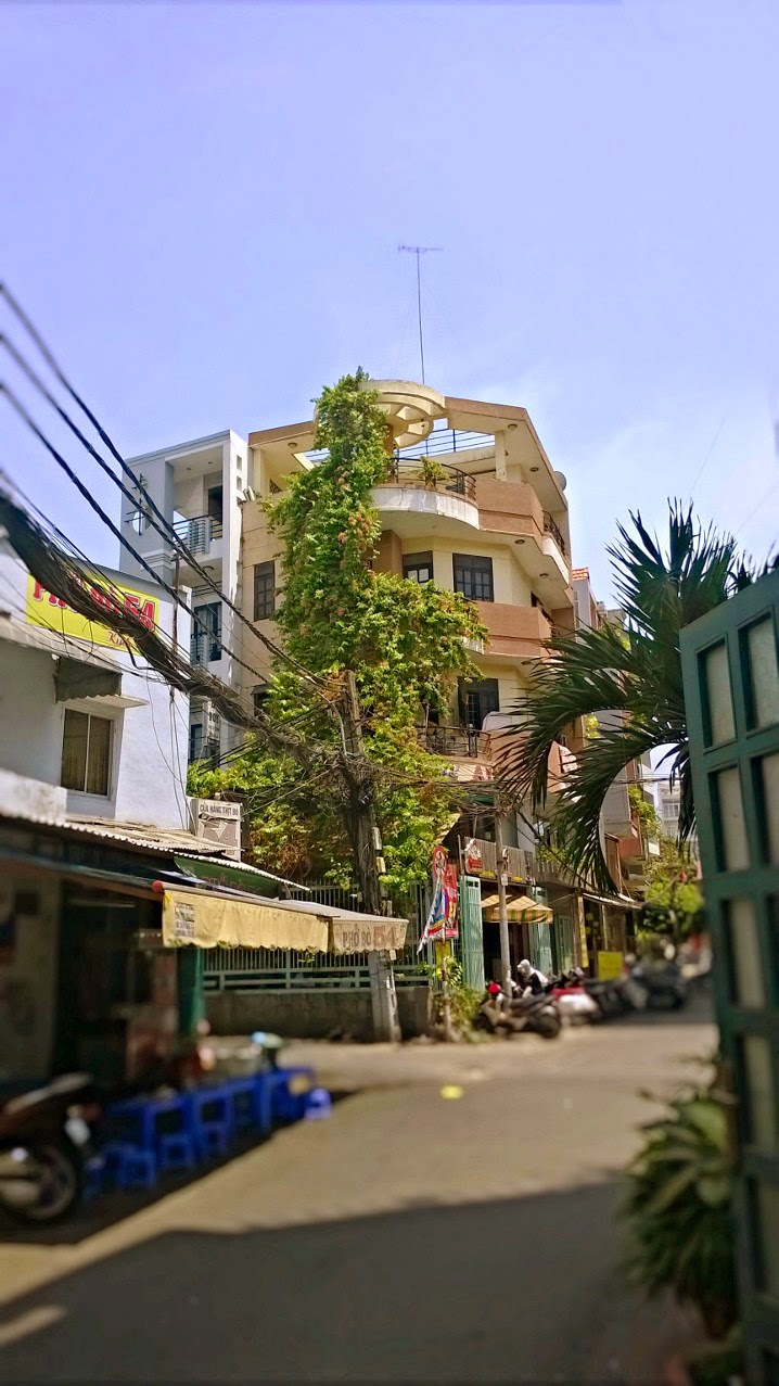 Giải pháp trông cây xanh chống nắng cho nhà phố