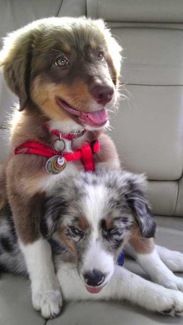 familia adopta perro ciego