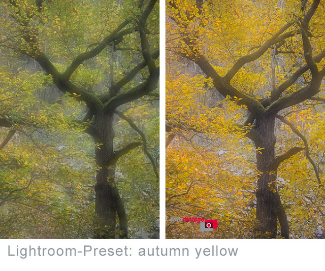 kostenloses Lightroom-Preset autumn yellow