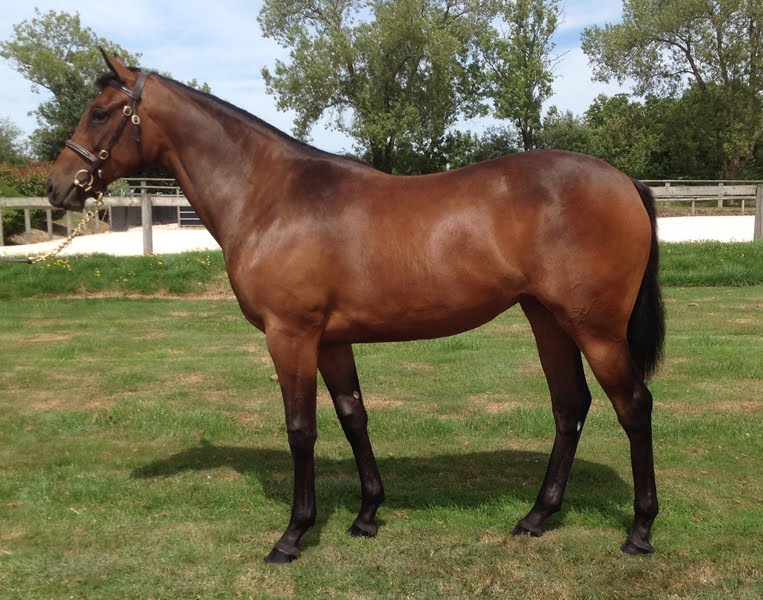 yearling por MayboyCharlie y Synergy
