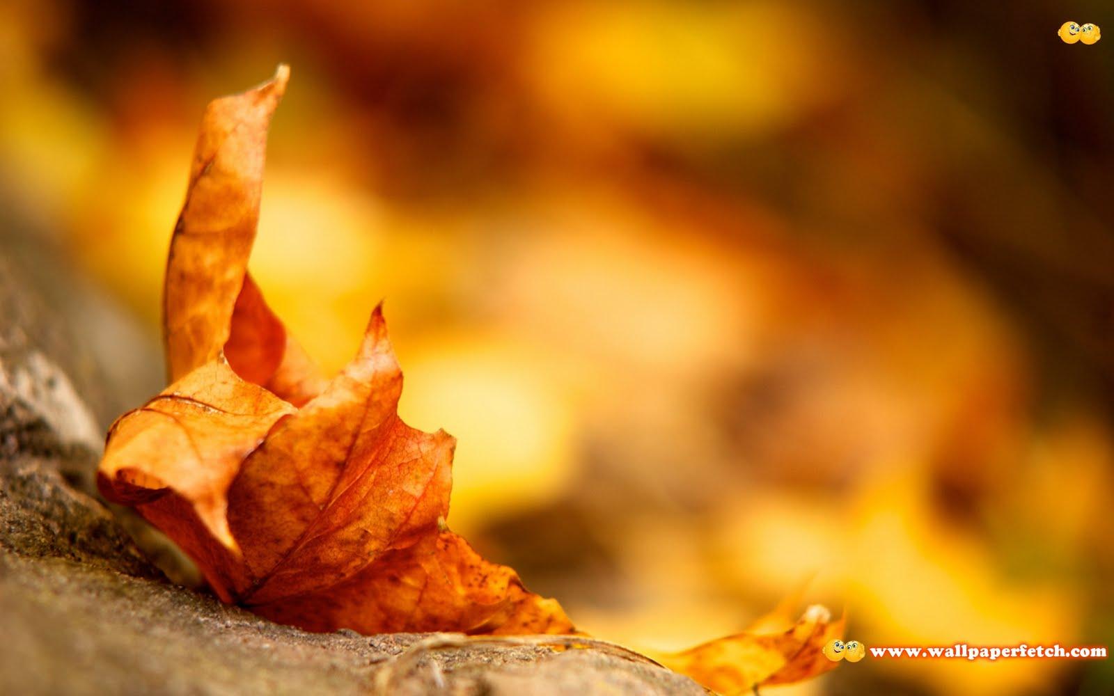 http://2.bp.blogspot.com/-JrJ8Xf0jhZo/TrxDijOZqOI/AAAAAAAAJgI/gDEj3m7_XzU/s1600/SuperPack_Beautiful_Nature_HD_Wallpapers_Part__80.48.jpg
