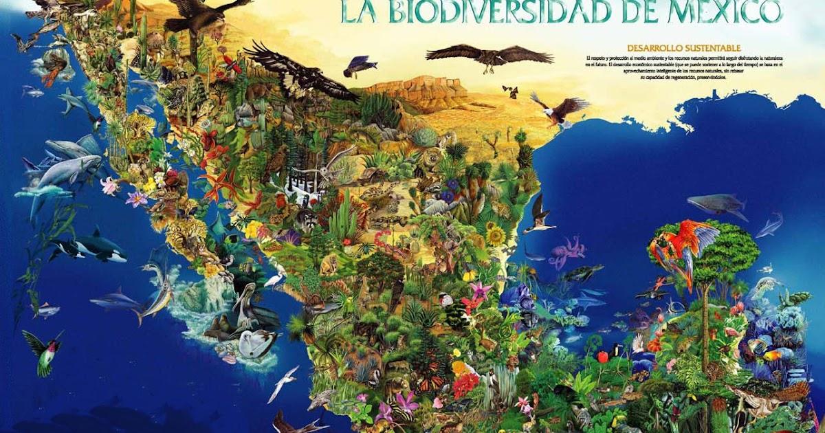 H P Reptiles México a trav...