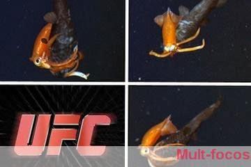 Lula lutando com peixe
