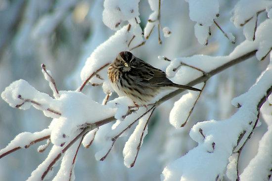 http://2.bp.blogspot.com/-JrW7ddrG2Rw/TvoBxVf2_-I/AAAAAAAAB7Q/u0XsH7rxwyQ/s1600/alimenti-uccelli-neve_3.jpg