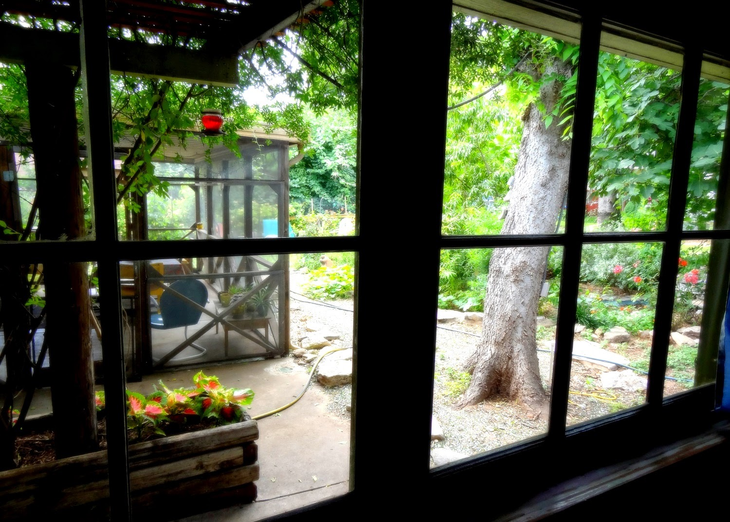 Window View Of Boho Garden