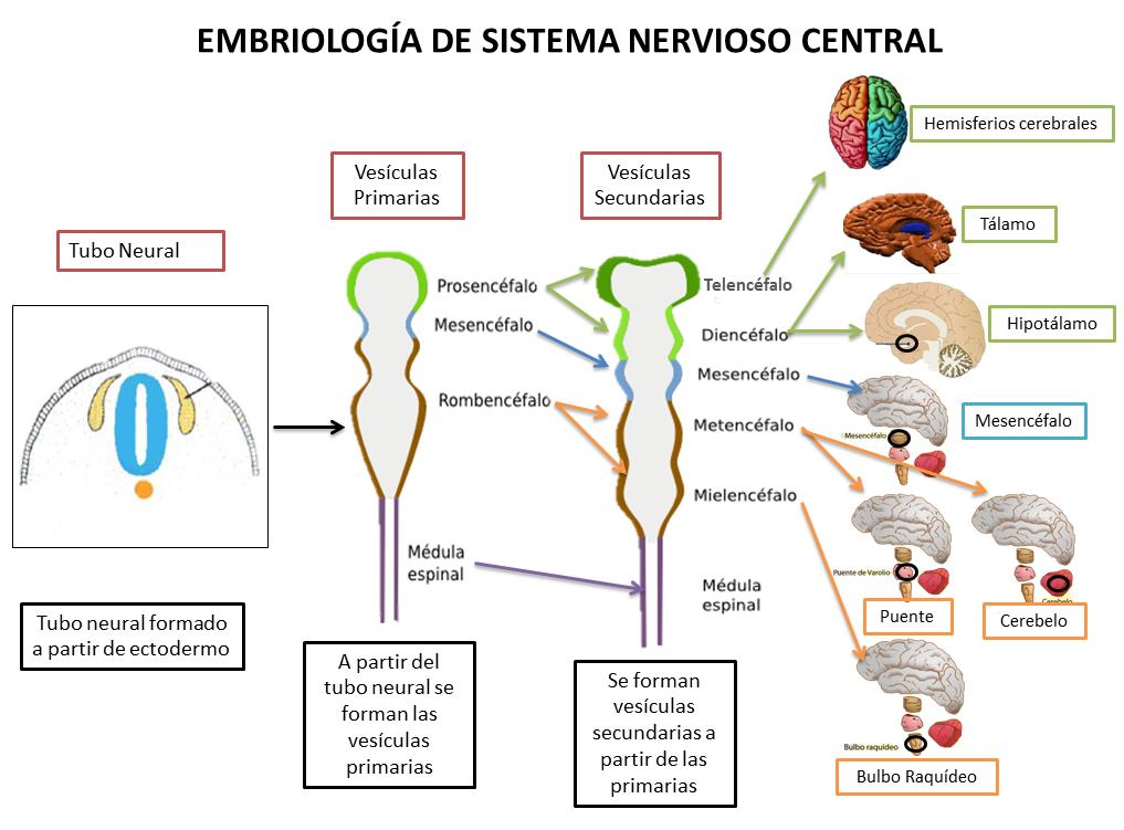 Fisiología Básica - Gabriel Olmeda: 2014