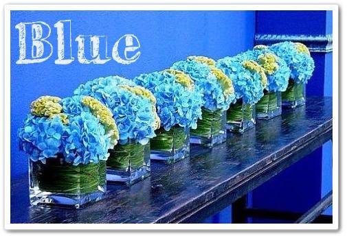 blå hortensia, blue hydrangea