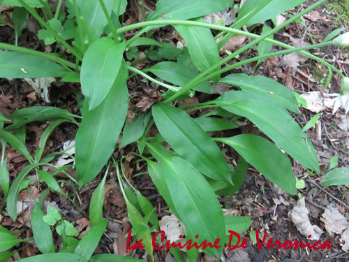 Wild Garlic 野蒜 熊蔥
