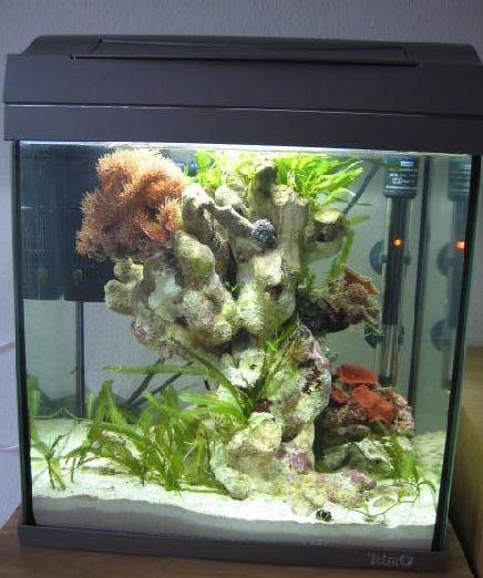 nano meerwasser aquaristik nano aquarium beispiel 1 30. Black Bedroom Furniture Sets. Home Design Ideas