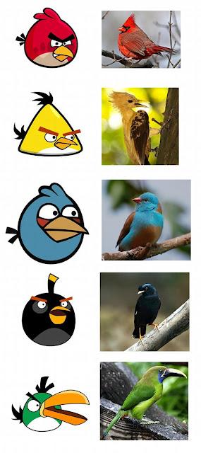 Yuk Lihat Foto-Foto Asli Burung Angry Bird Di Alam Nyata