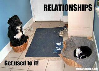 so sind beziehungen hund und katze