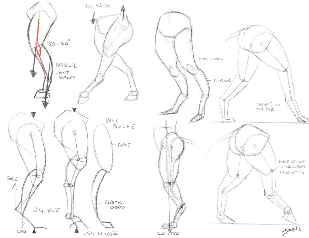 anthro anatomica  stance sketches