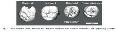 Denisovan teeth