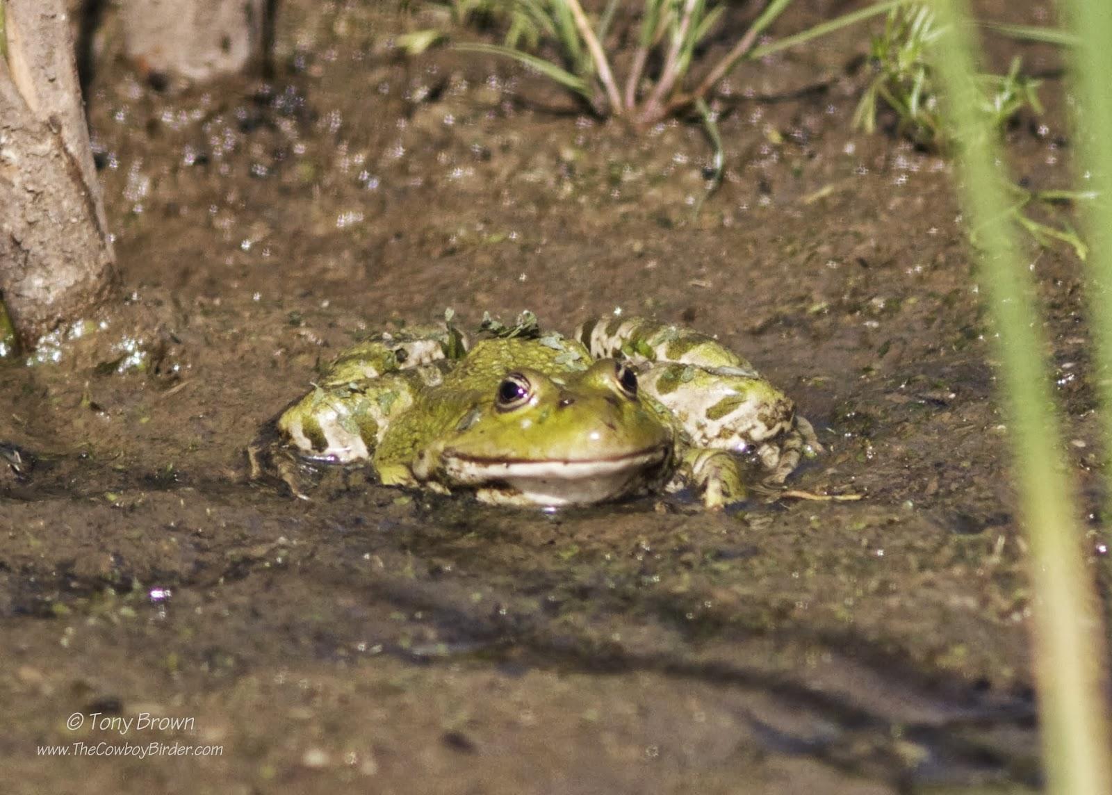 Oare Marshes, Kent, Wildlife Trust