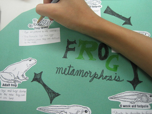 Students Make Frog Poster for Science