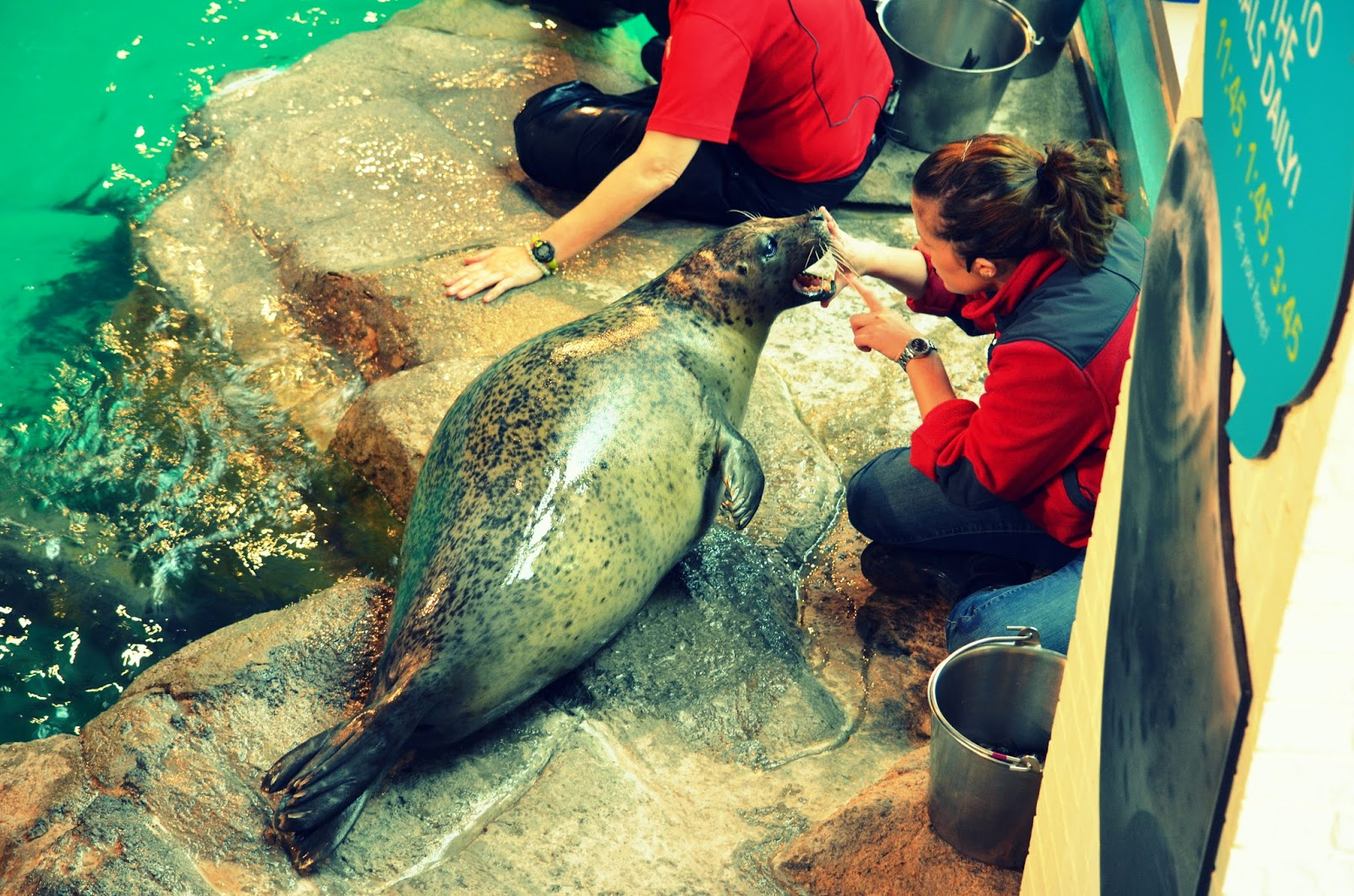 Maritime Aquarium Day Out