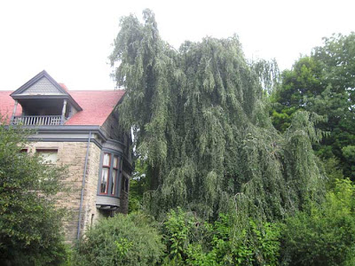 Twisted and weeping tree, next to gray and red house