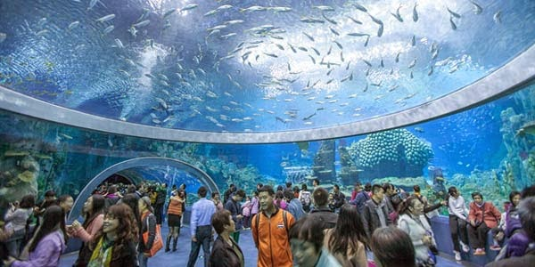 Fenomena Indah; Aquarium Terbesar Ada di China