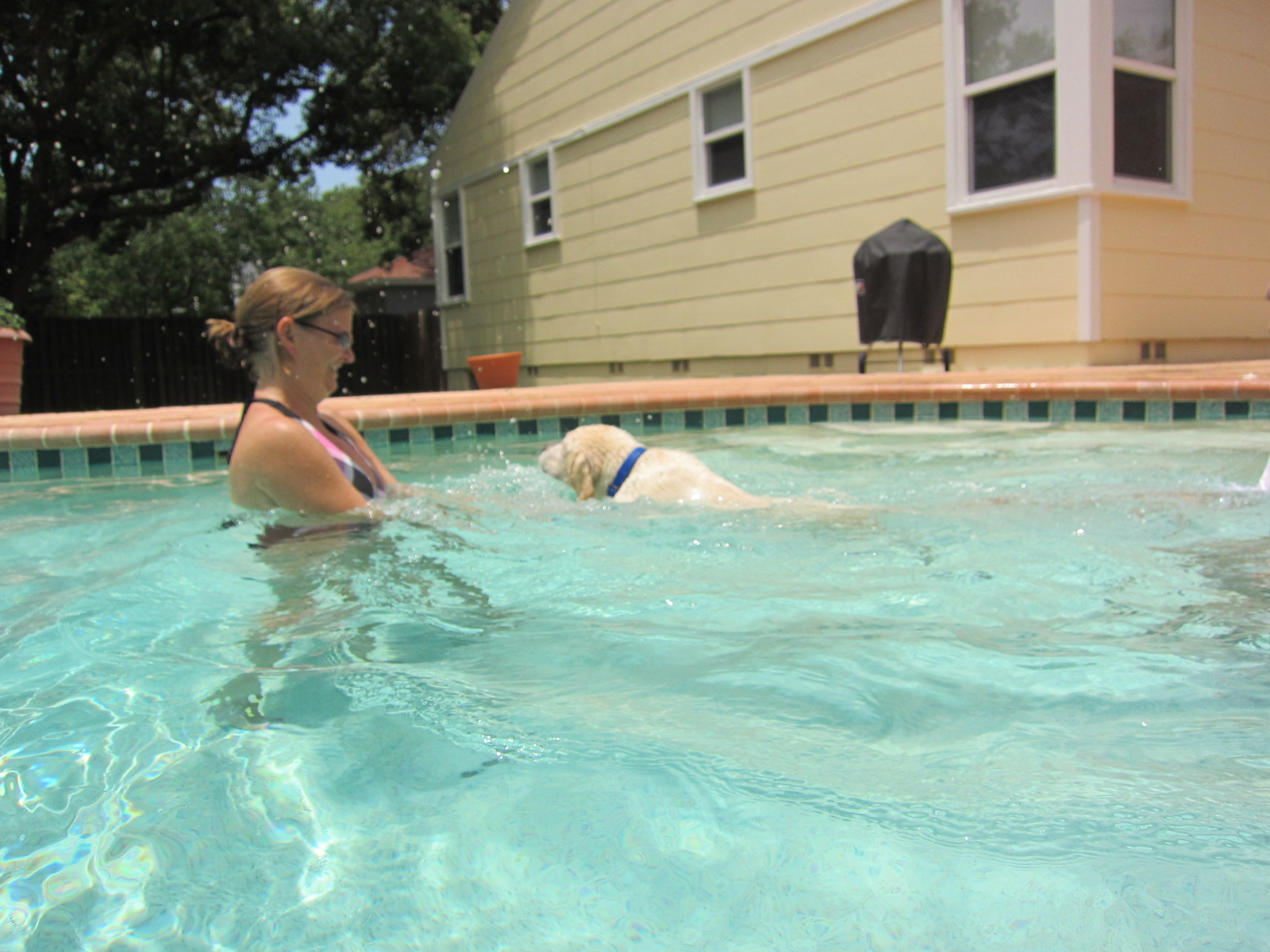 Mclean Puppy Chronicles Swimming At Stephanie 39 S