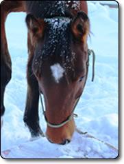 Hästar på Dalpraktiken