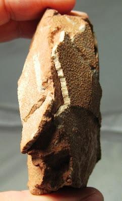French Dinosaur egg fossil