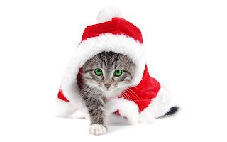 santa cat (15)