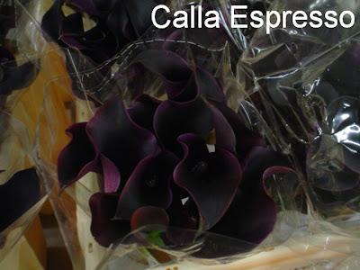 images Calla Espresso