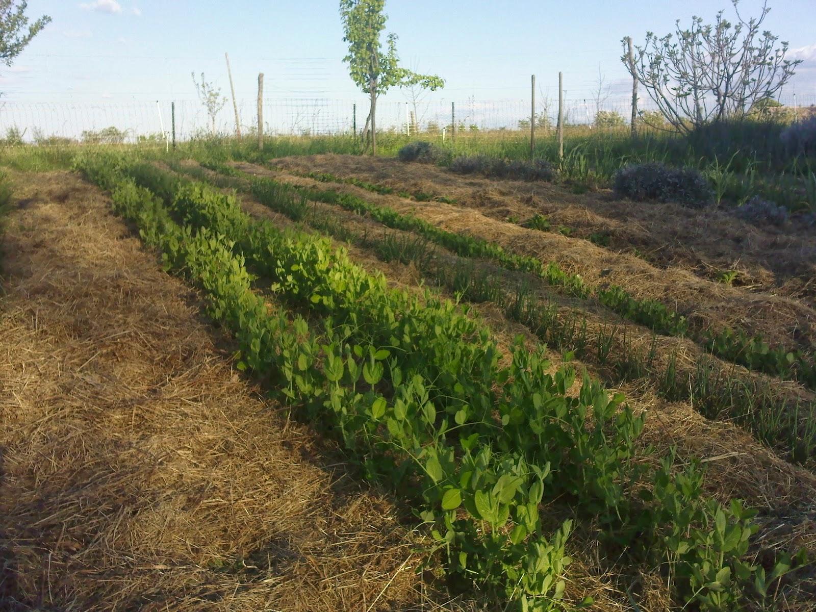 mach bio jardiner bio pesticides dans les jardins suites sans fin fukushima. Black Bedroom Furniture Sets. Home Design Ideas