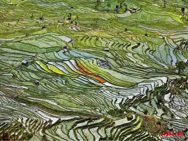زراعة الأرز في مقاطعة يونان، الصين