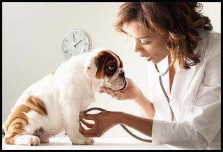 dog care2
