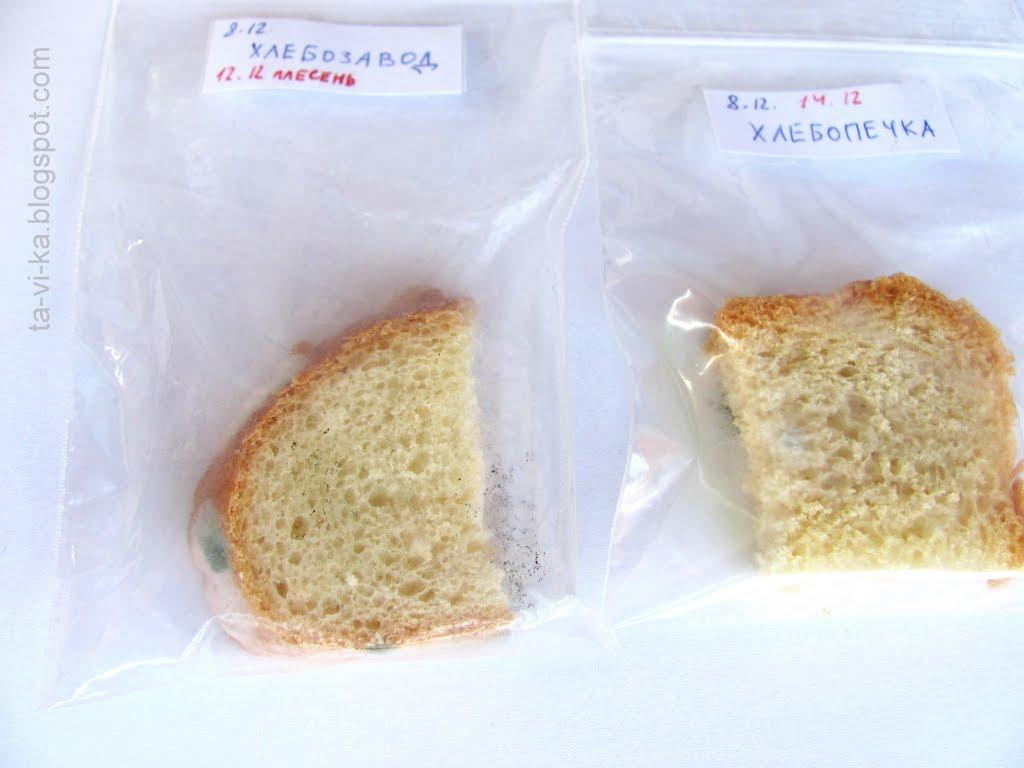 плесень фото на хлебе