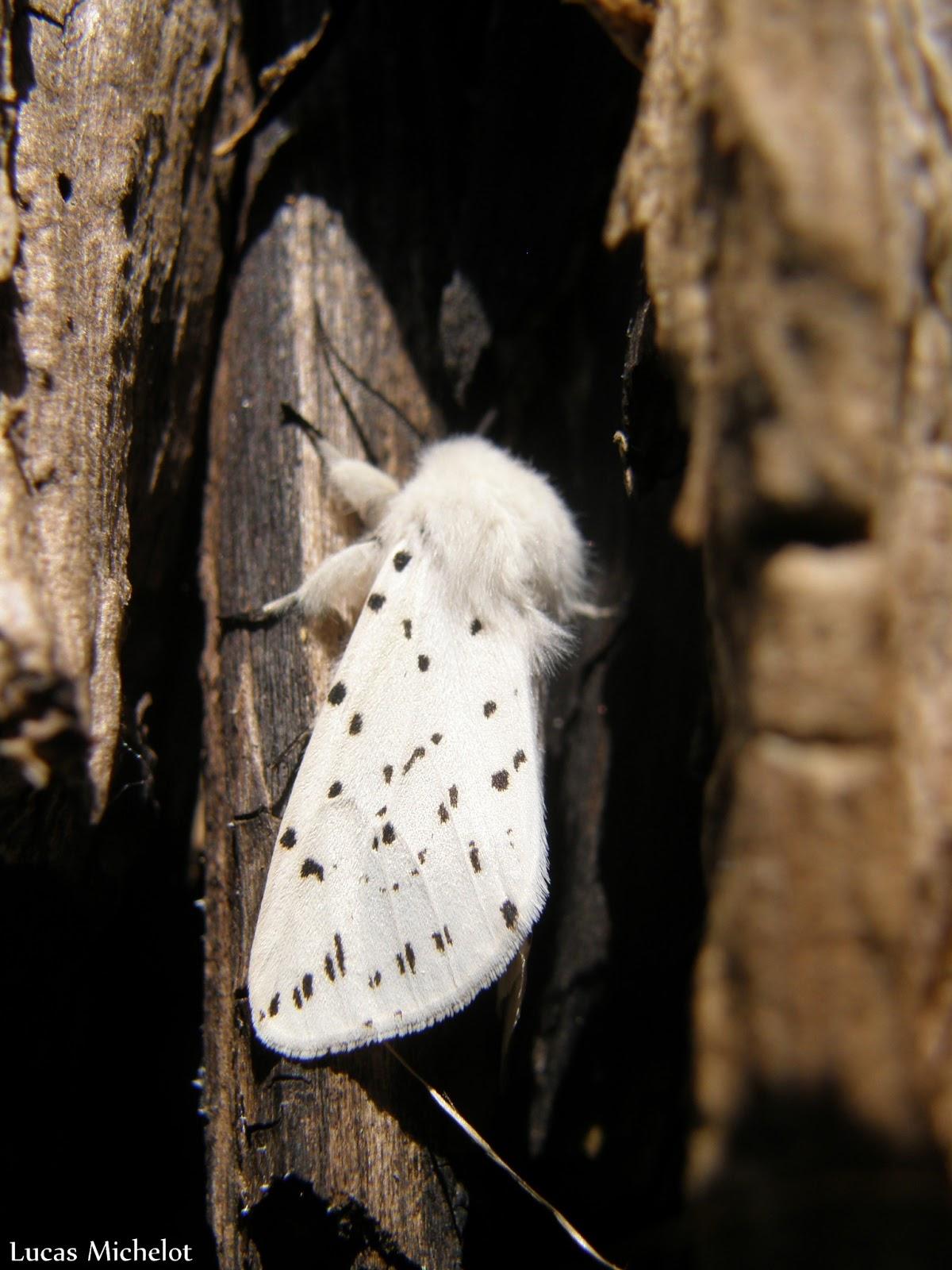Quelques images de la nature 2 for Le noir et le blanc
