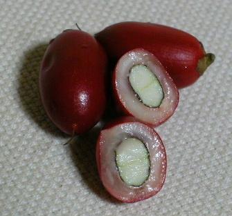Buah Berry Ajaib - Tukarkan Rasa Masam Kepada Manis