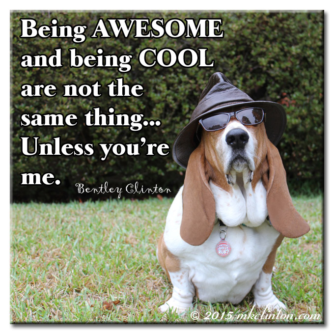 Basset Hound in shades and hat meme