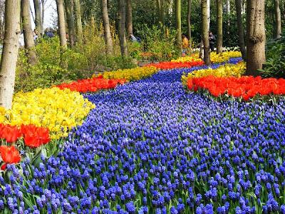 حديقة كيوكينهوف Keukenhof أكبر و أجمل حديقة أزهار في العالم. 5
