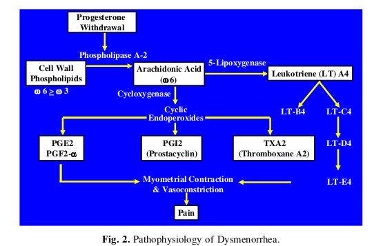 Patofisiologia della dismenorrea