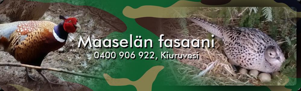 Maaselän fasaani  - 0400 906 922, Kiuruvesi