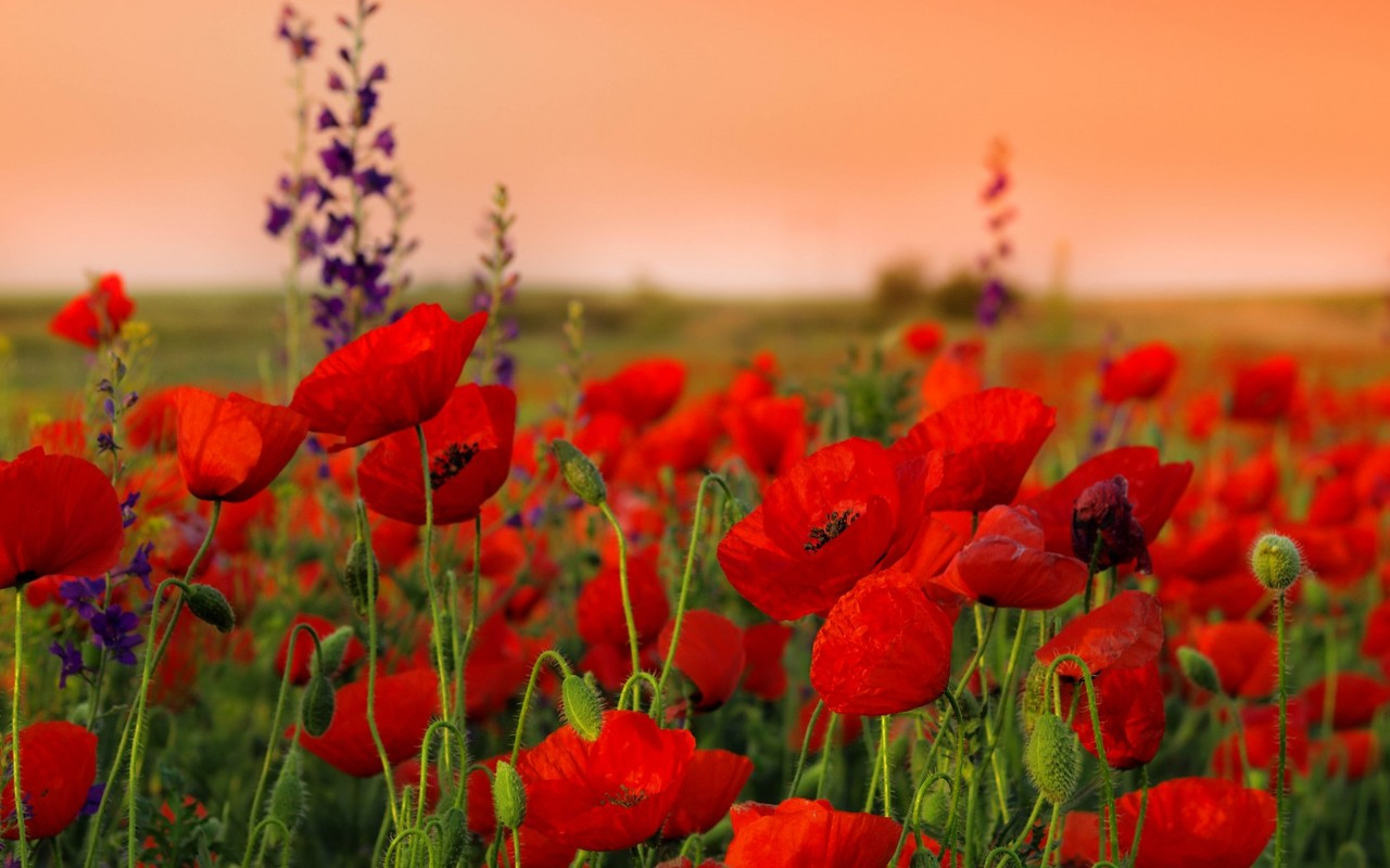 flower wallpapers widescreen space - photo #15