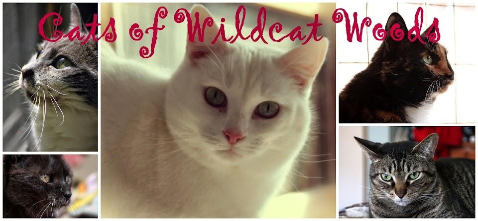 Cats of Wildcat Woods