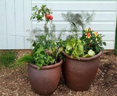 menanam dalam pot