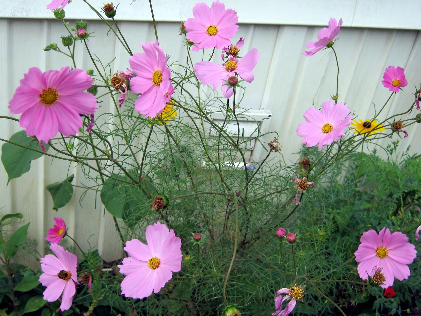 mon Garden Flowers graph