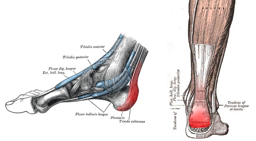 hip flexor rehab strolling