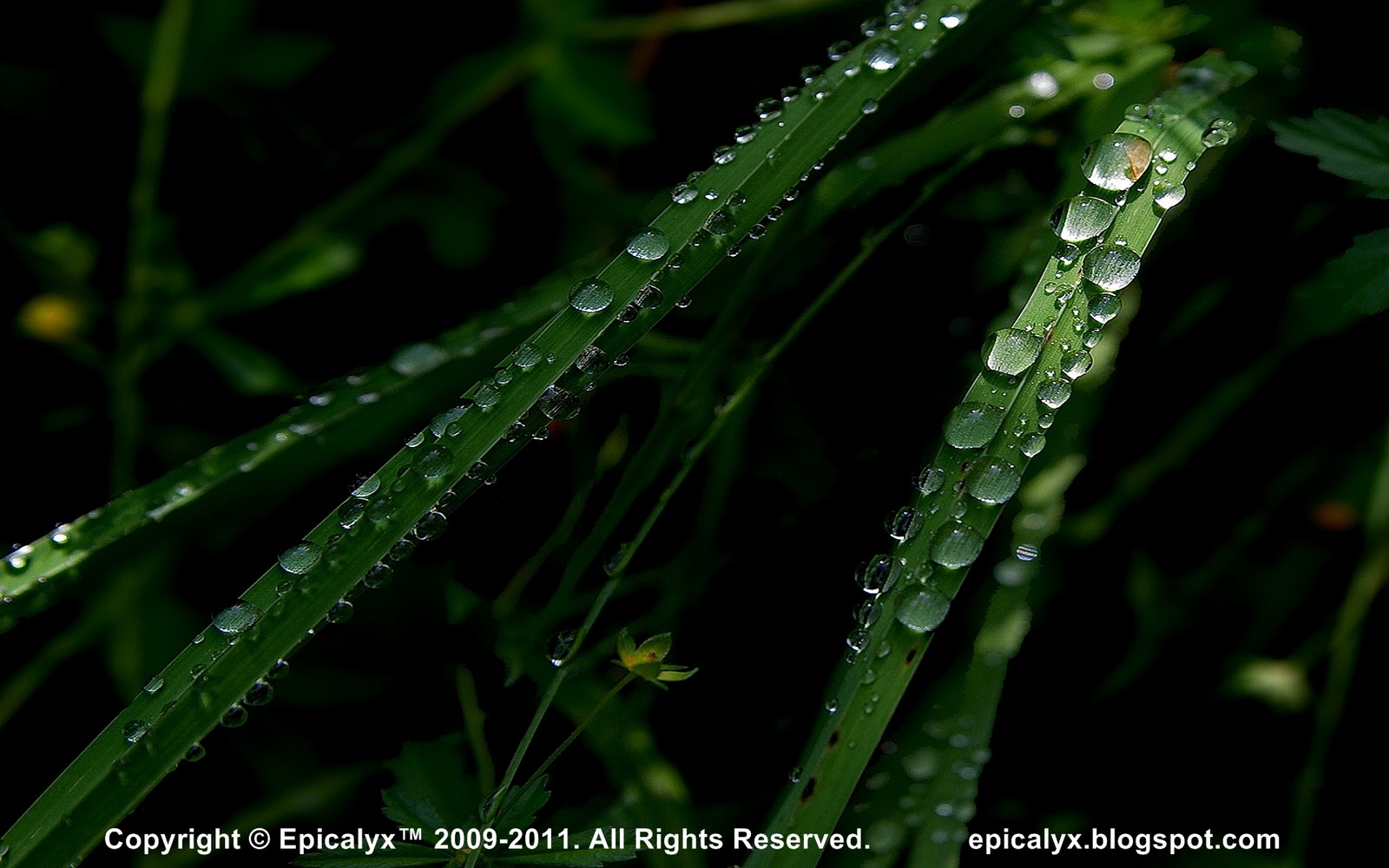 http://2.bp.blogspot.com/-JxybgtyhldM/TsDUUdaRzaI/AAAAAAAAAKY/G38CpHgcEzg/s1600/Dark+Green+Grass.jpg