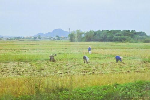 A typical ricefield in Vietnam on our way to Halong Bay